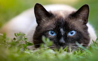 Анкилостома у кошек лечение