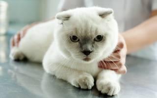 Мочекаменная болезнь у котов причины