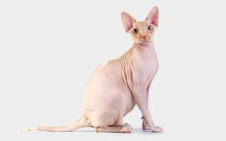 Кошка против болезней