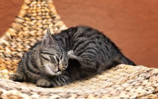 Недержание мочи у кота лечение