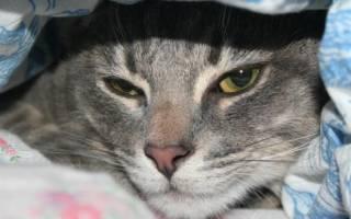 Вирусный кошка лечение энтерит