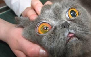 Эпифора у кошек лечение