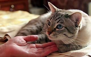 Недержание мочи у кота после травмы лечение