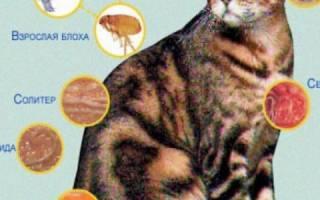 Опарыши у кошки как лечить