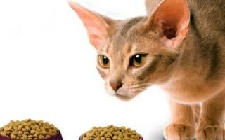Как заставить кота есть после болезни