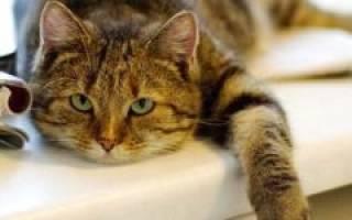 Кошка не ест лечение