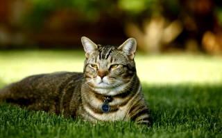 Стерилизация кошки уход