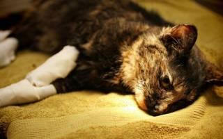Остеомиелит у кошек симптомы лечение