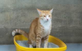 У кошки камни в мочевом пузыре лечение