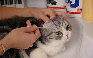 Уход за домашней кошкой