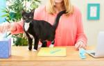 Гарантию аллергия приведет осложнениям отдать кошку лечение