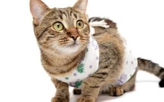 Стерилизация кошек уход после операции обработка швов