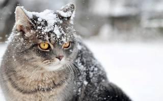 Перхоть у кота причины лечение