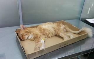 Лимфома у кота лечение
