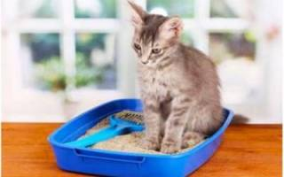 Лечение кошек вазелиновым маслом