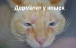 Как лечить дерматит у кошки в домашних