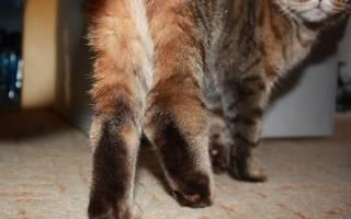 Артроз у кошек симптомы и лечение