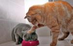 Чем лечить кота не ест