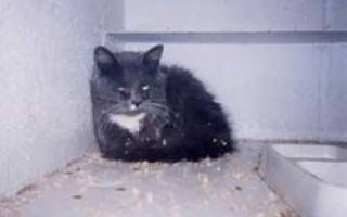 Спазмолитики для кошек при мочекаменной болезни
