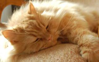 Кастрация кота послеоперационный уход