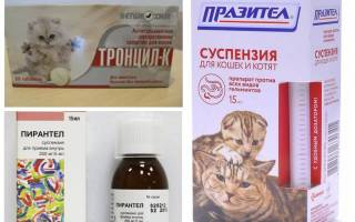 Кот чешется до болячек чем лечить