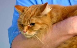 Мочекаменная болезнь у кота прогнозы