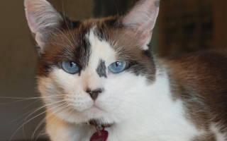 Почечная болезнь кошек