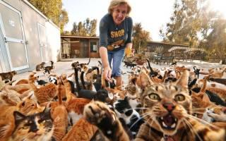 Болезнь любителей кошек