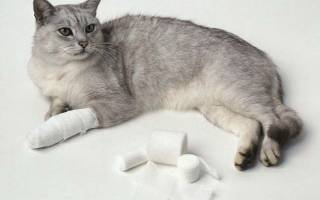 Вывих лапы у кошки лечение в домашних