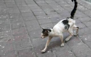 Чем кормить кота во время болезни