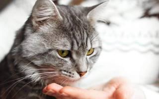 У кота не проходит цистит после лечения