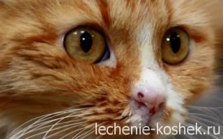 Длительность лечения кальциноза у кошек