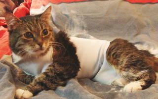 Онкология у котов симптомы и лечение