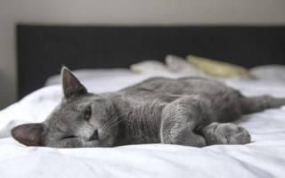Непроходимость у кошек лечение