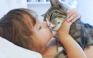 Правда что кошки лечат