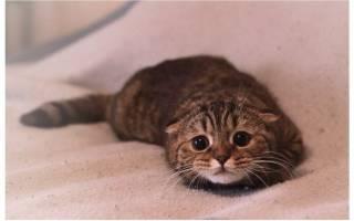 Как лечить ожог кошки