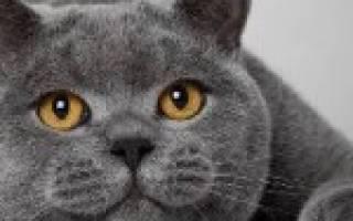 Цвет кошки лечение