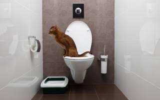 Глисты у кошки лечение в домашних