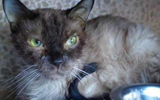 Панлейкопения у кошек прогноз лечения