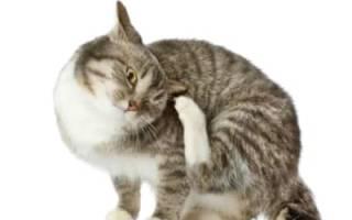Блохи у кошек лечение