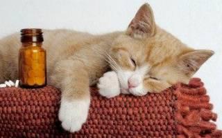 Отравление у кошки симптомы и лечение