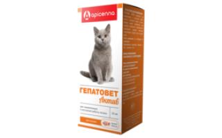 Гепатоз печени у кошек симптомы и лечение