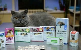 Лечение кошек дозировка