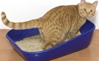 Кот заболел мочекаменной болезнью