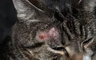 Лечение парши у кошек