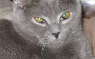 Третье веко у кошки лечение в домашних