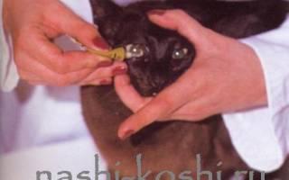 Болезни глаз у котов третье веко