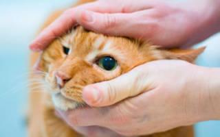 Чем лечить глаза у кошки в домашних