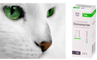 Капли для лечения глаз кошек