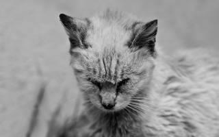 Как лечить панлейкопению у кошек